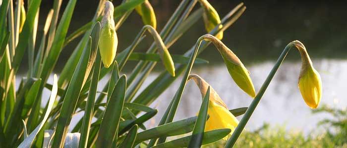 Tuinonderhoud Maart Tuinieren Tips en Advies