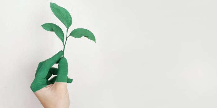 Zo worden je tuin én je huis groen