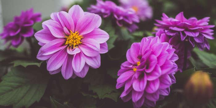 De beste tips voor zowel je huis als tuin