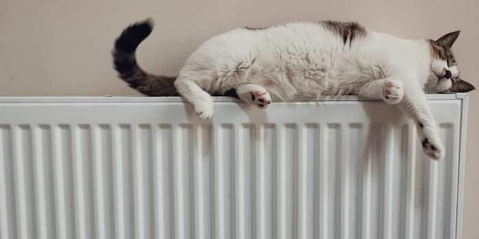 Hoe mooi kan een beetje warmte zijn
